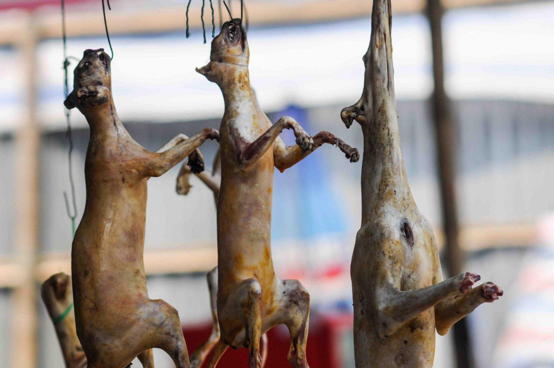 dog dead market