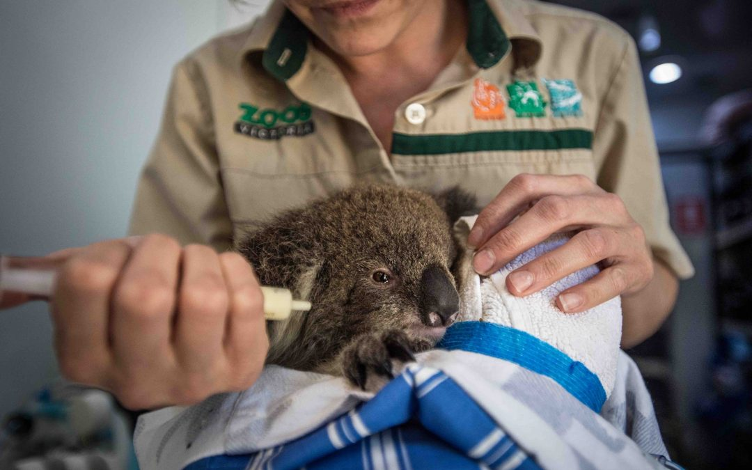 When Natural Disaster Strikes, Wildlife Pays A Heavy Price