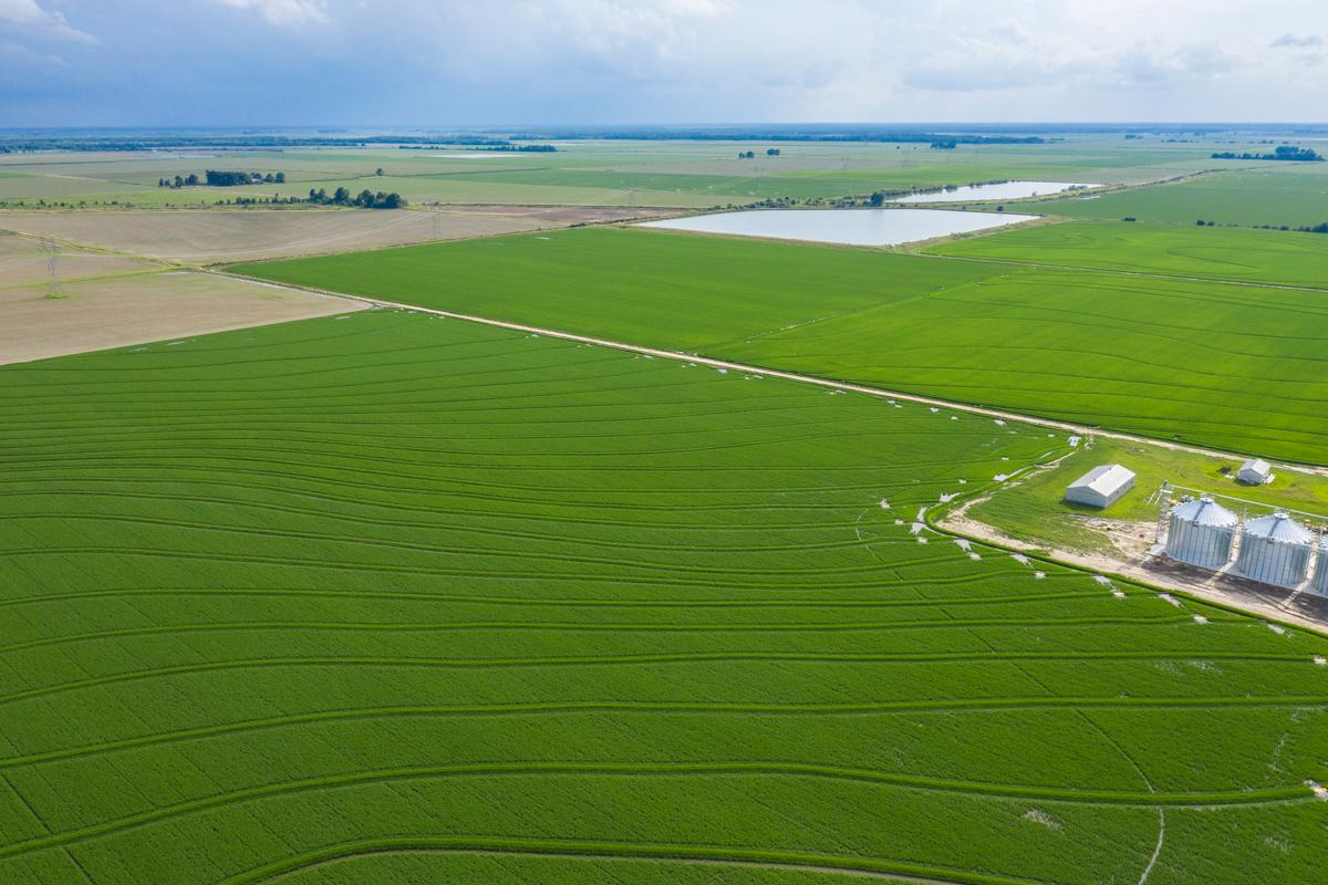 rice farm Arkansas