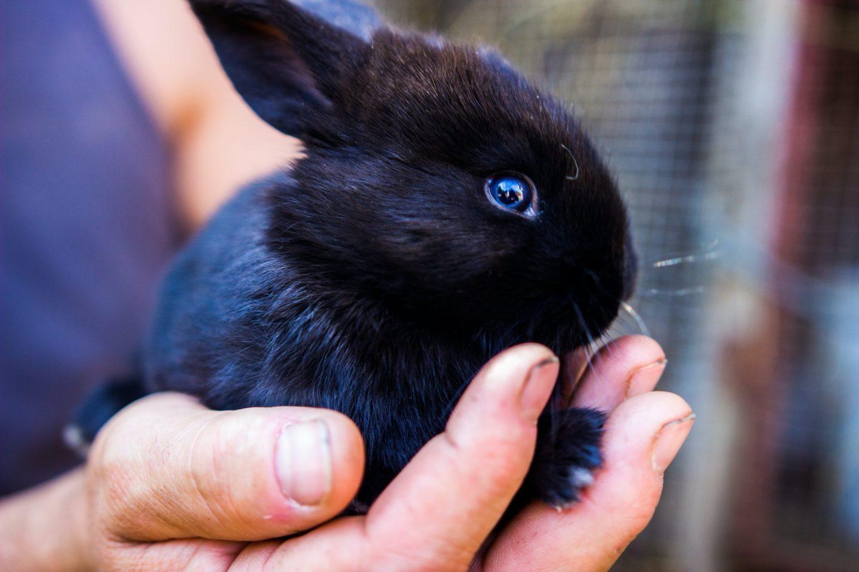 baby rabbit hands