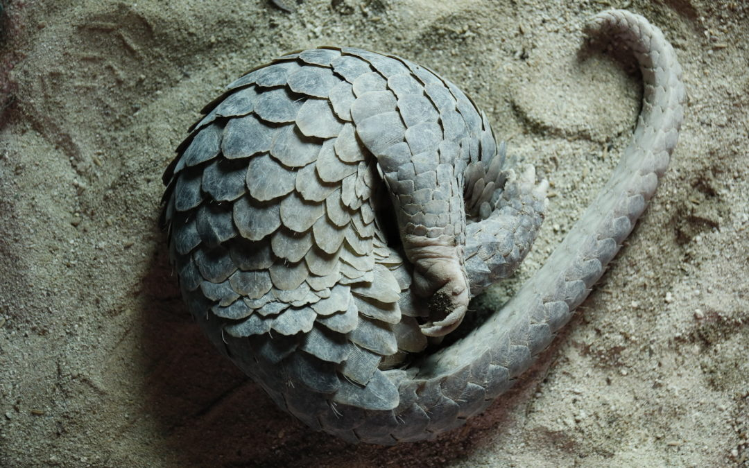 Has Earth's Most Trafficked Mammal Stopped the World?