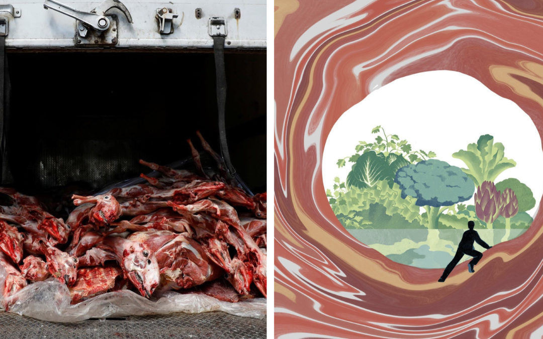 The New York Times Swapped an Image of Animal Carcasses for an Abstract Illustration. But Why?