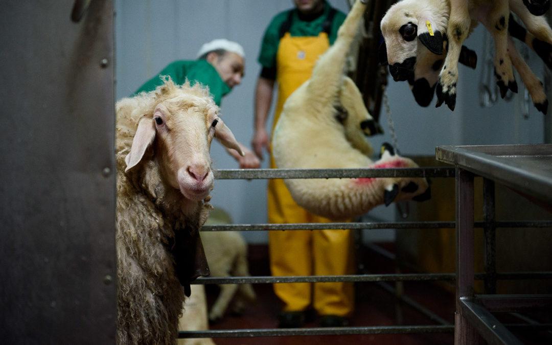 Meat-Free Future? Coronavirus Exposes America's Fragile Food System