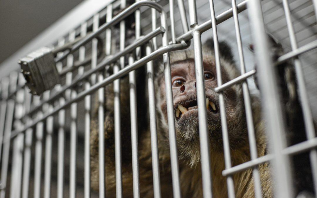 COVID-19 Exposing Flawed Moral Framework Behind Animal Testing