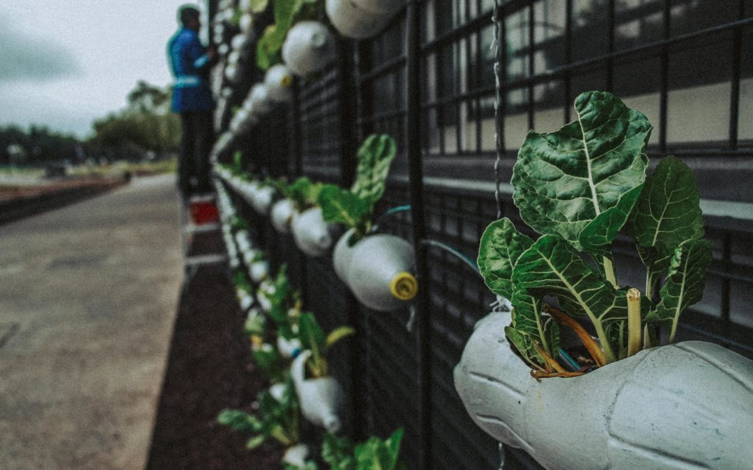 Advocating for Food Justice During a Pandemic: Lauren Ornelas Speaks Out