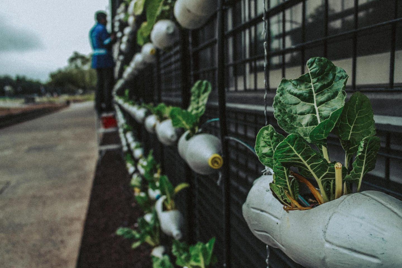 farmer plant agriculture