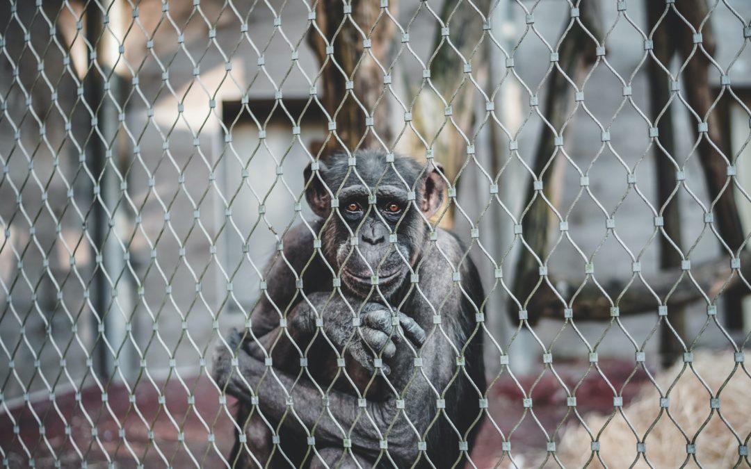 The Animals We Often Overlook