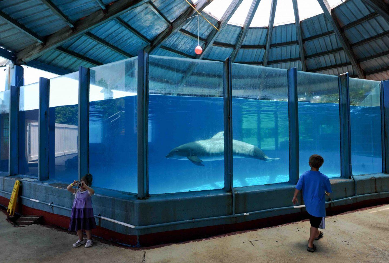 dolphin tank captive