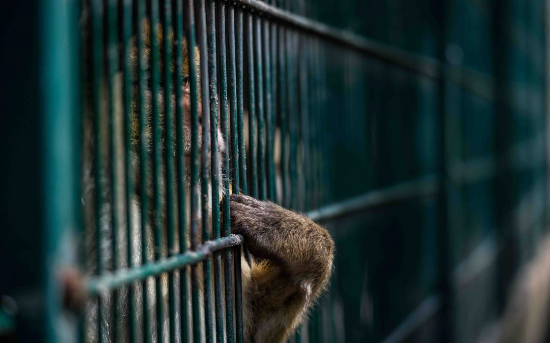 I Was a Journalist Who Reported on Captive Animals—Then I Became One