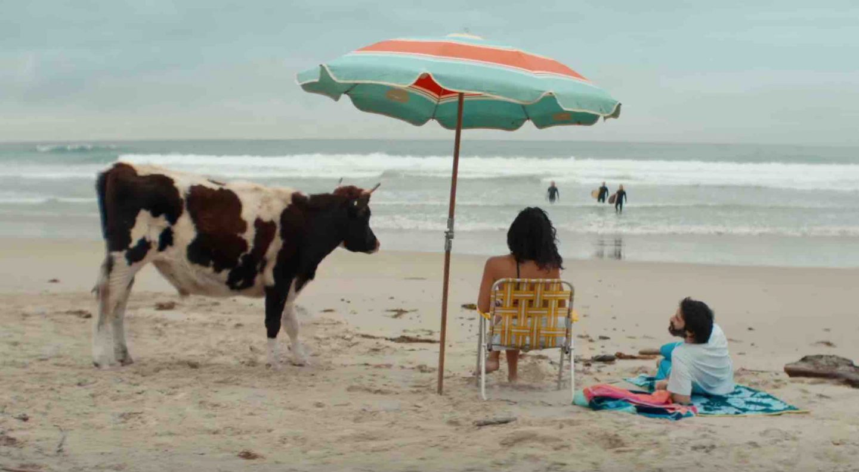 cow beach people