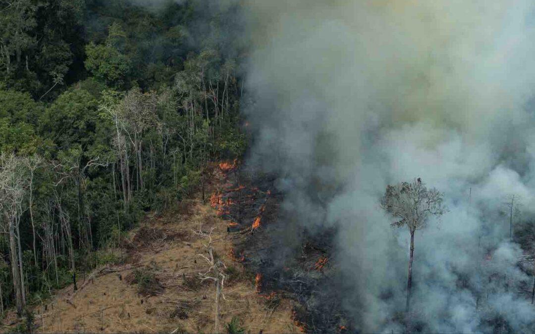 The $60-Billion Industry Behind Brazil's Exploitation of the Amazon Rainforest