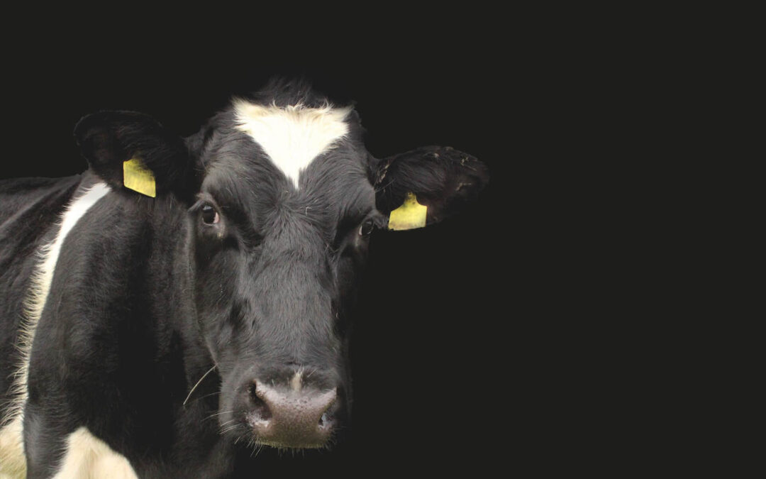 $100 Million Financing for Plant-Based Protein? Let's Talk About Billions for Animal Ag