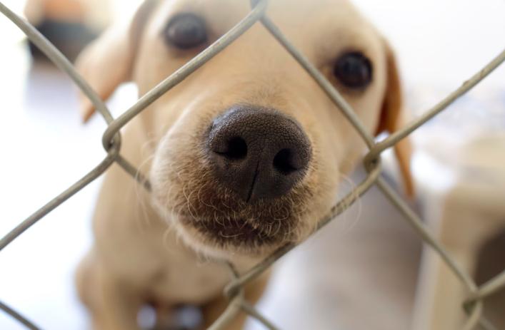 dog shelters animal rescue
