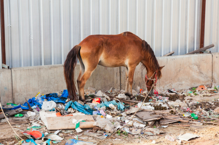 rescue abused horses