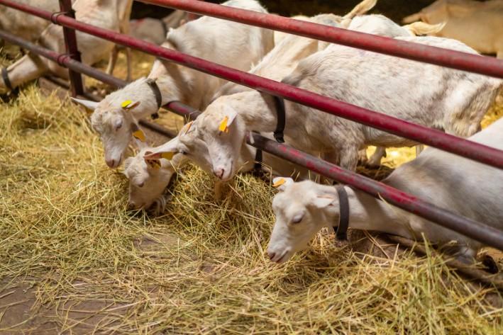 rescue abused farm animals