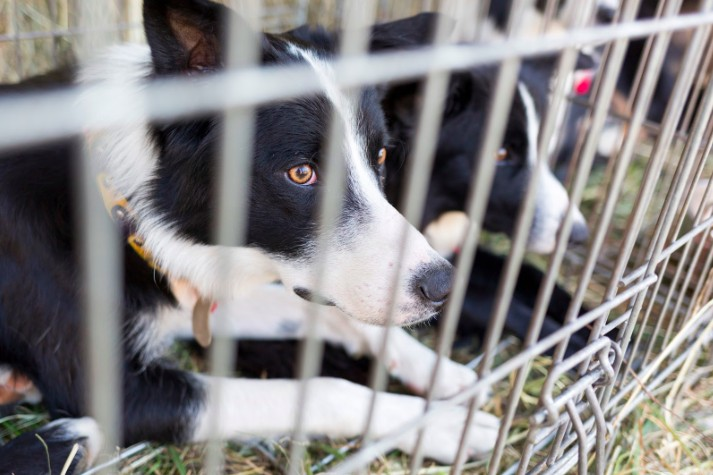 animal rights groups against abuse