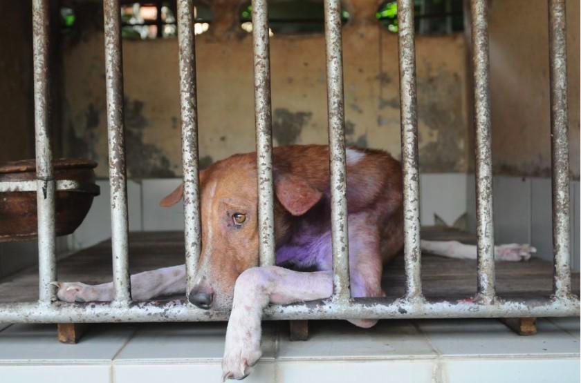 puppy mills euthanasia