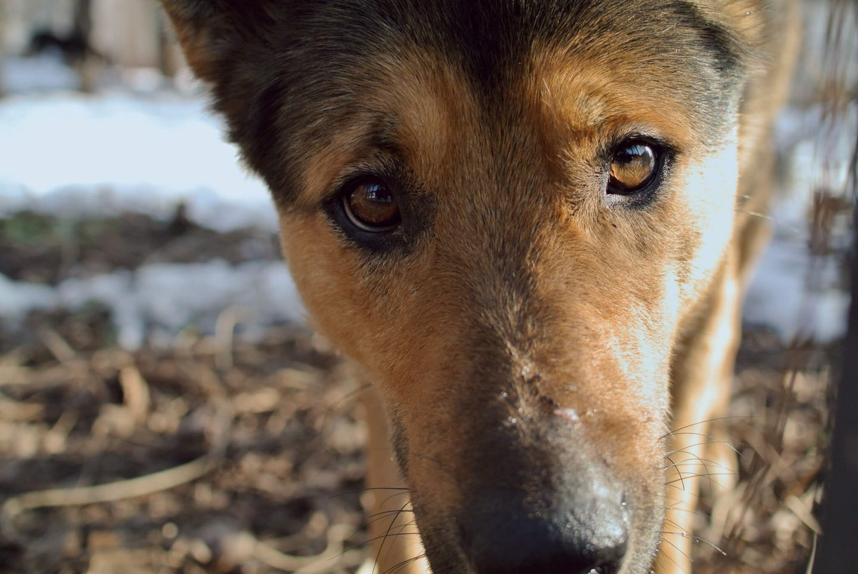 dog close eyes
