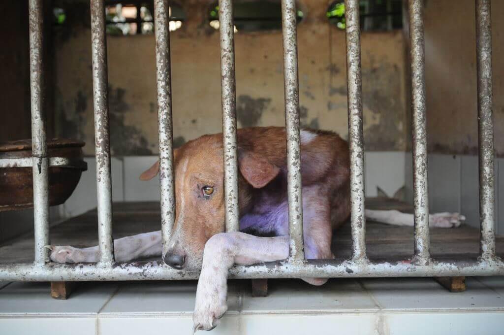 dog stray cage