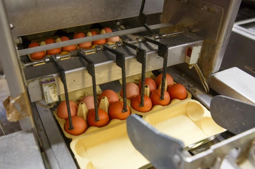 multi-billion dollar egg industry