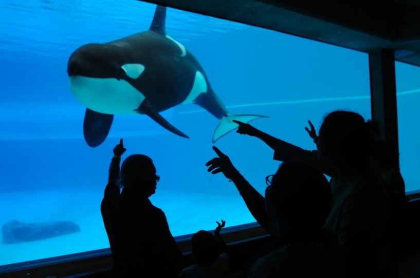 cruelty in animal entertainment