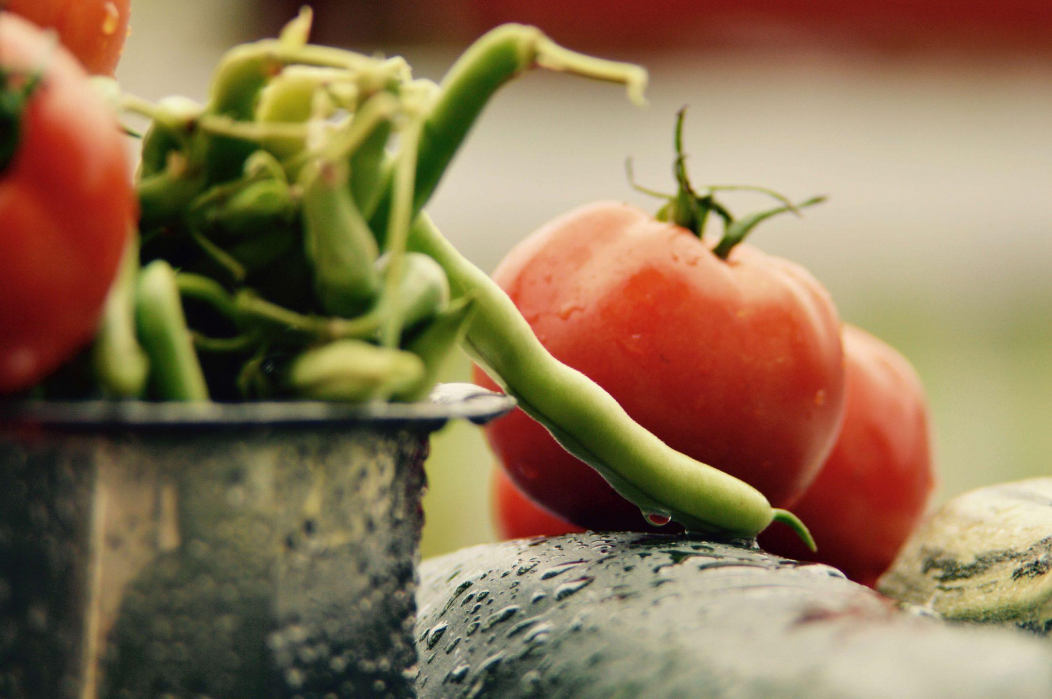 tomato harvest vegan