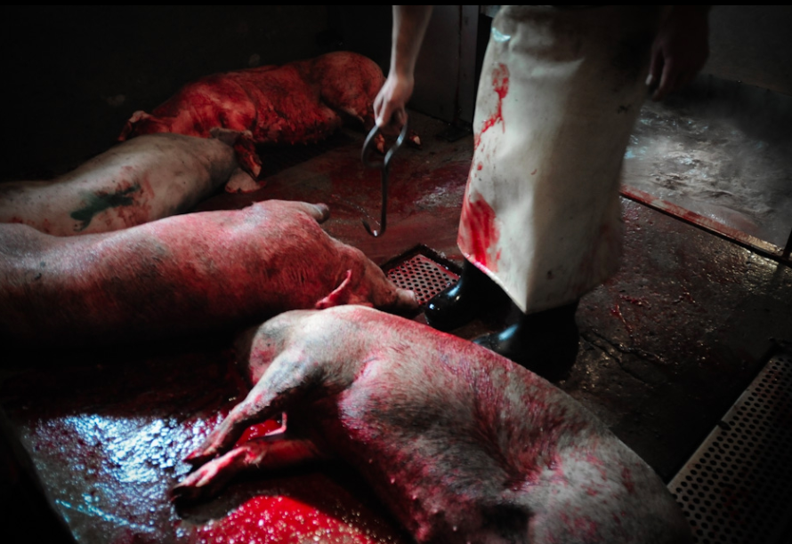 psychologic trauma slaughterhouse workers