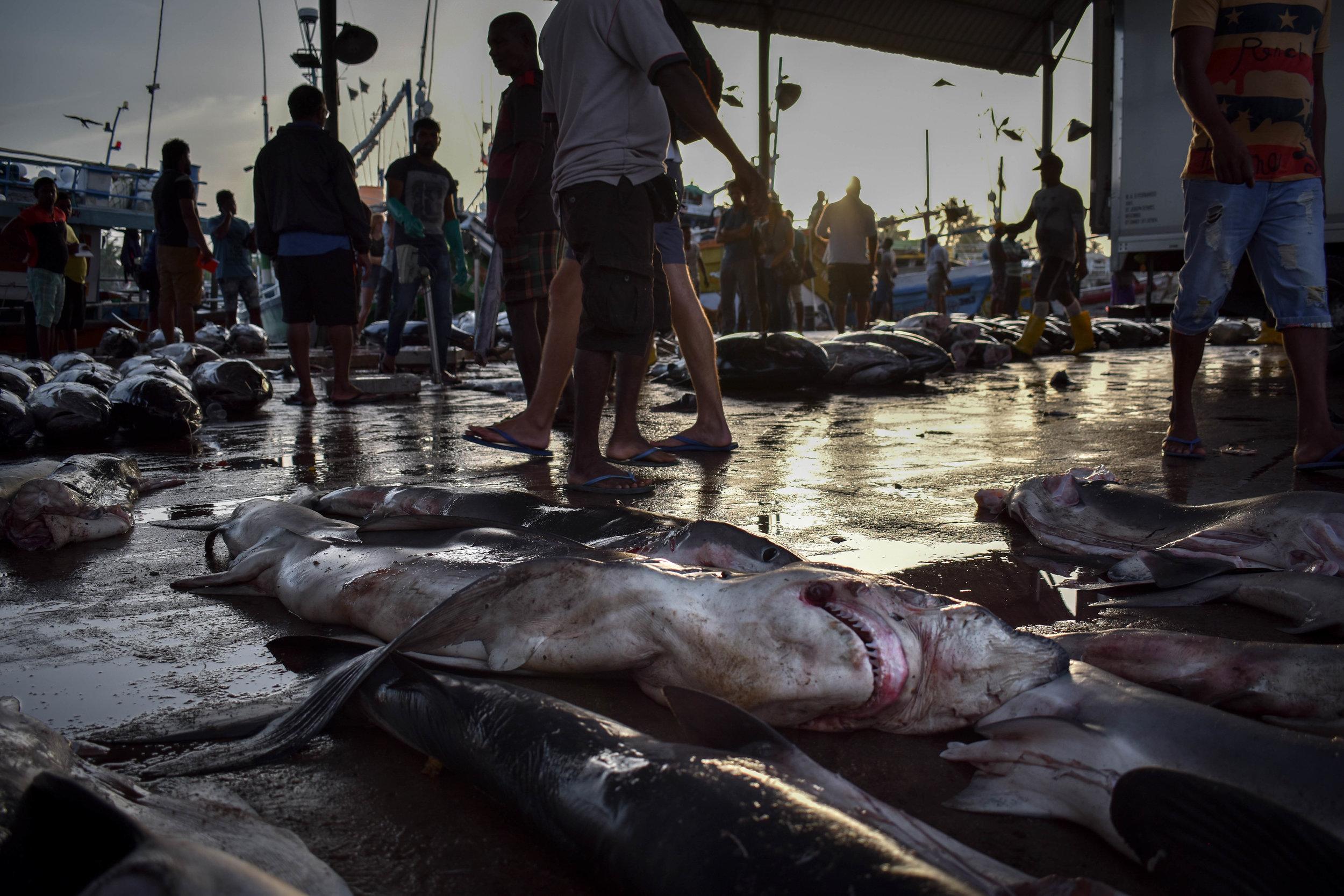 is farmed fish better than wild fish