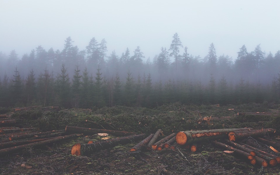 deforestation and animal agriculture