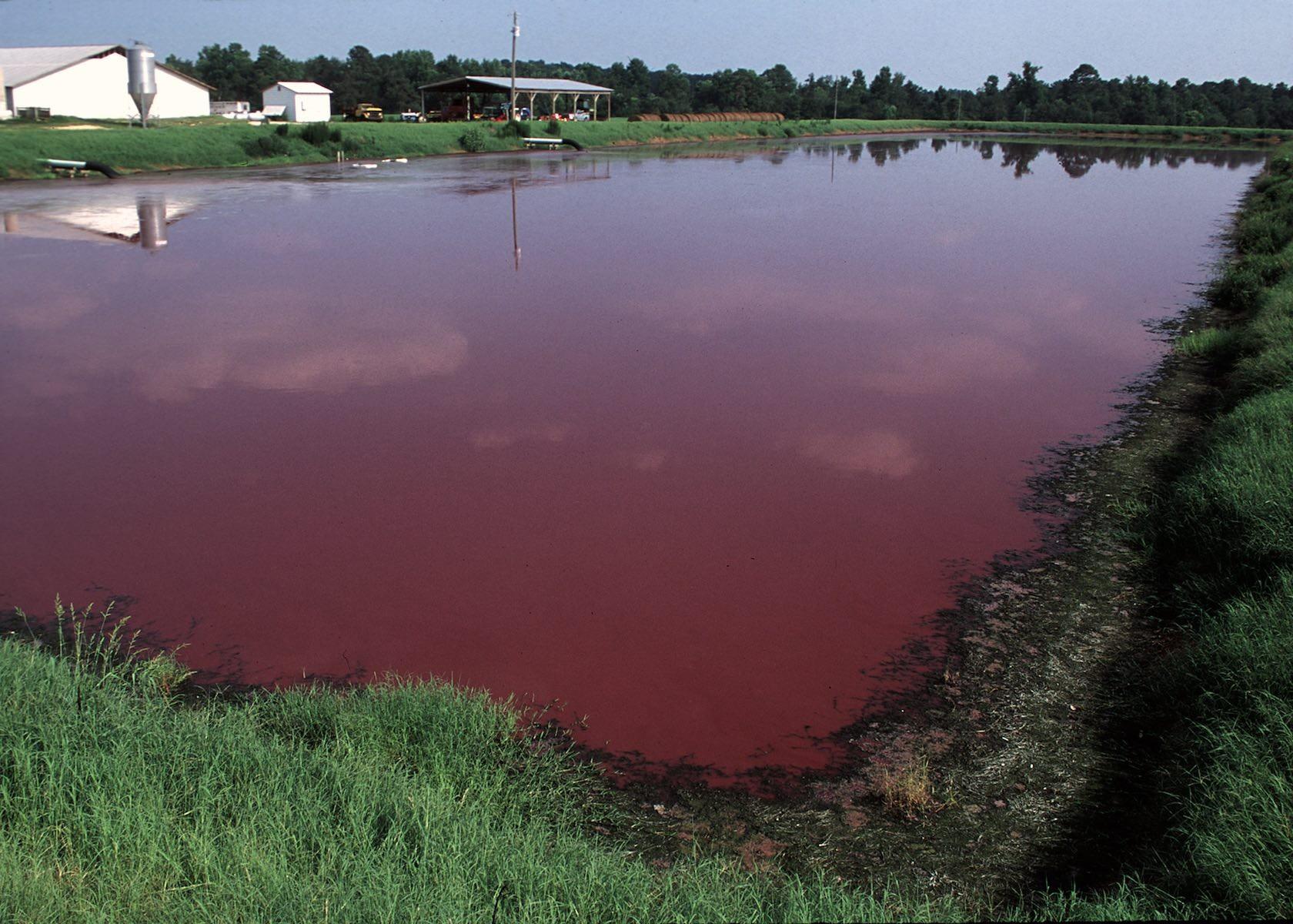 North Carolina manure lagoon